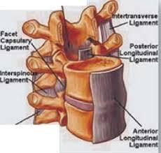 Ligamentos de las articulaciones intervertebrales