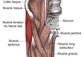 Músculo tensor de la fascia lata
