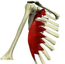 balance muscular músculo serrato anterior