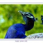 bird-256846__180