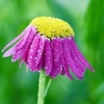 flower-807030_640