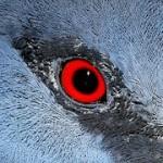 eye-788662__180