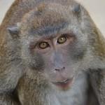 monkey-686050__180