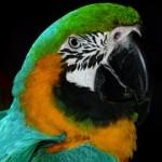 parrot-4078__180