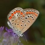 butterflies-810477__180