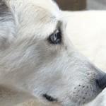 dog-186222__180