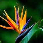 flower-181984__180