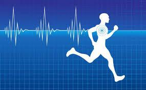 Manual cardiologia del deporte