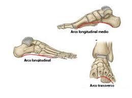 arcos del pie