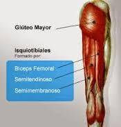 Prueba muscular extensión de cadera