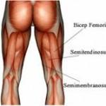 Anatomía palpatoria: músculo semimembranoso