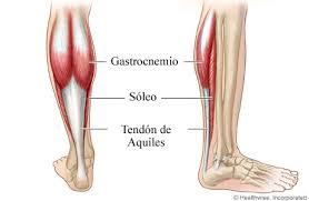 anatomía músculo sóleo