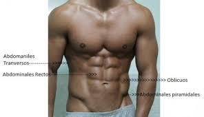 Músculo oblicuo interno del abdomen