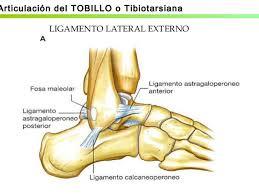 Ligamentos lateral tobillo