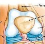 que es el cartilago