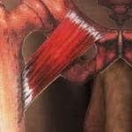 anatomía: músculo pectineo