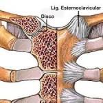 articulación esternocostoclavicular