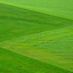 meadow-196567__180