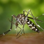 tiger-mosquito-49141__180